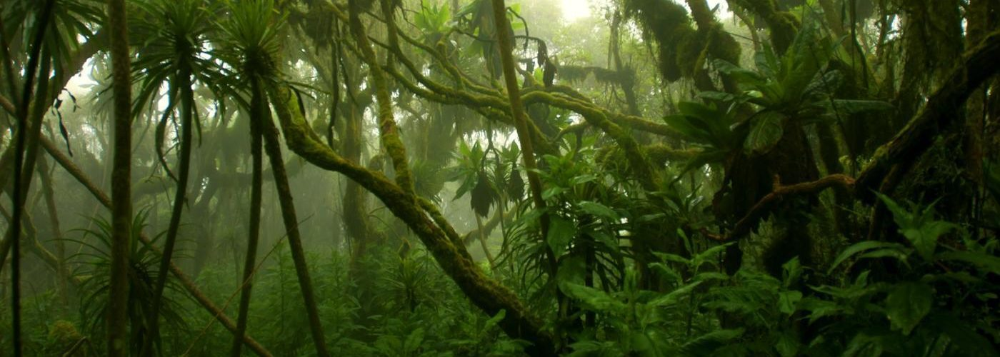 congo-rainforest-climate_de94c6611766c4ac.jpeg