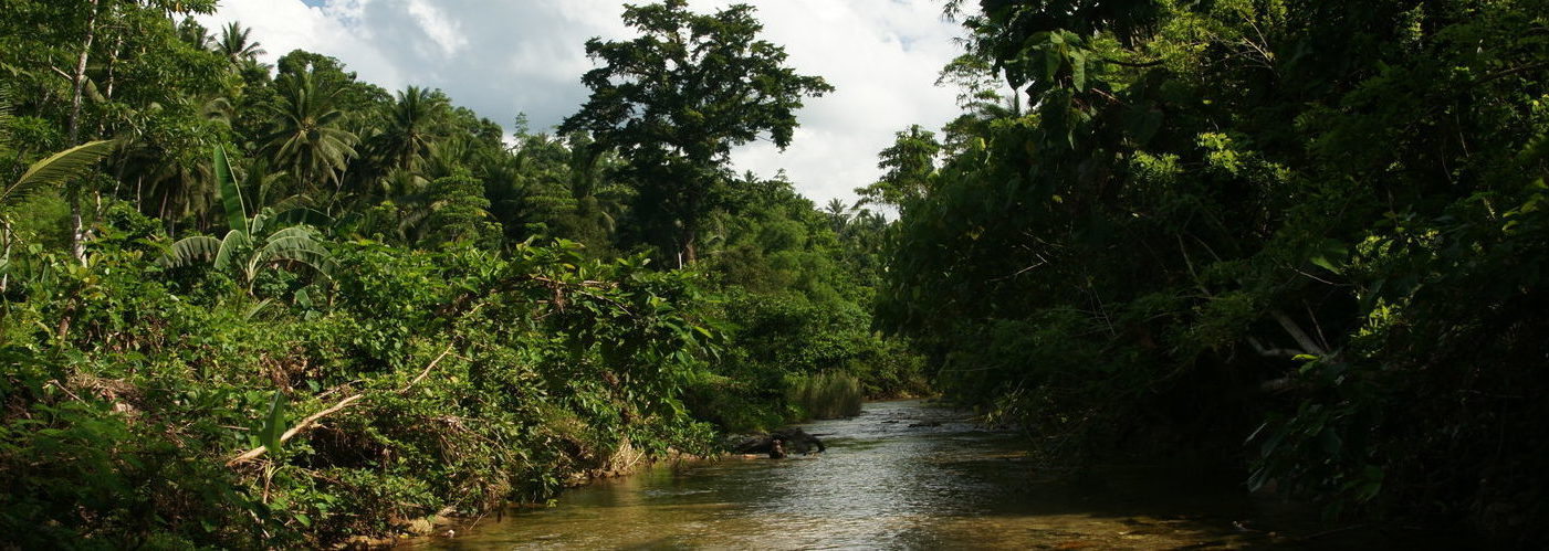 Jungle river nature – Mindoro island